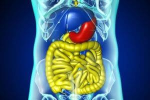 肝臓病・肝臓イメージ